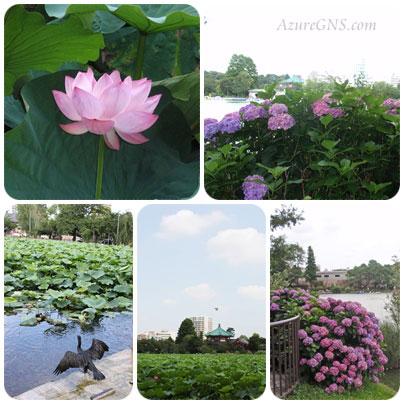 tsuyu20110714shinobazu