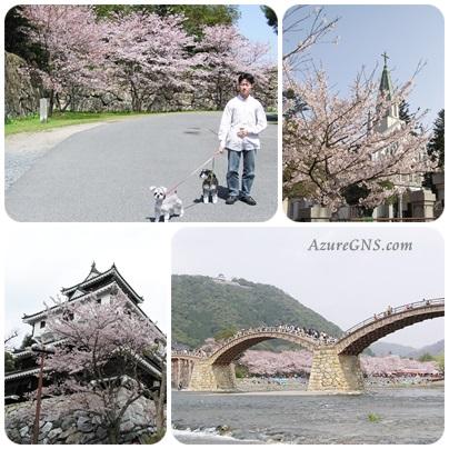 ohanami200404hagiiwakuni
